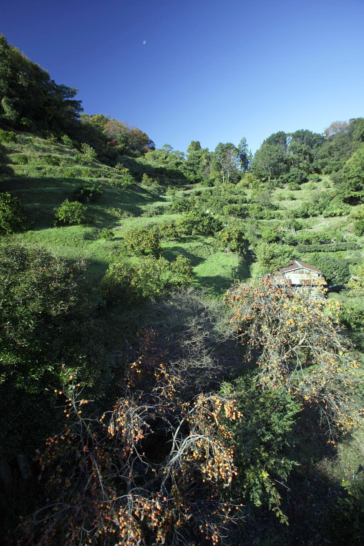 日当たりの良い斜面を利用したみかん畑